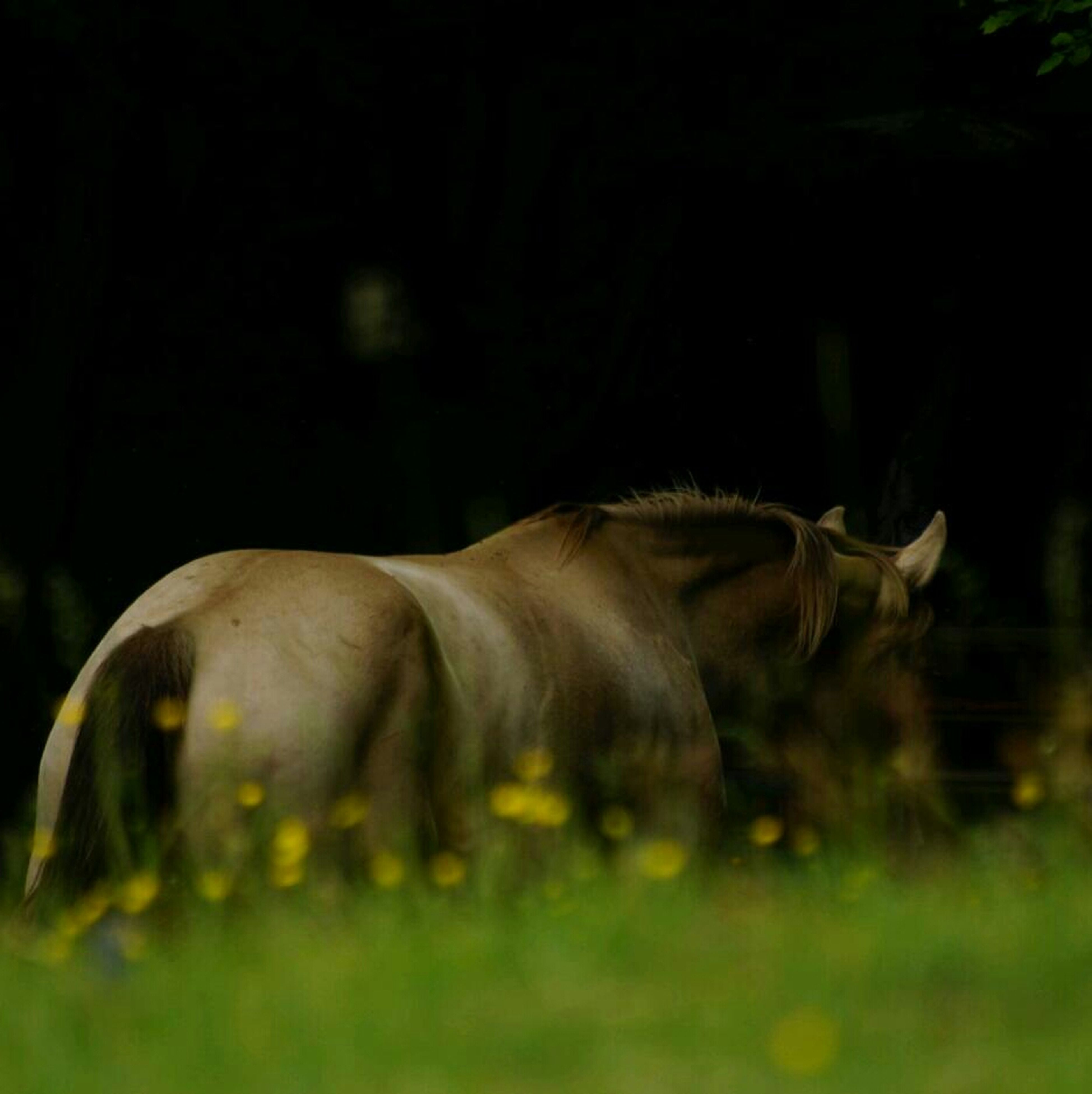 animal themes, one animal, mammal, domestic animals, grass, field, side view, animals in the wild, wildlife, selective focus, green color, nature, no people, zoology, plant, outdoors, night, relaxation, animal head, focus on foreground