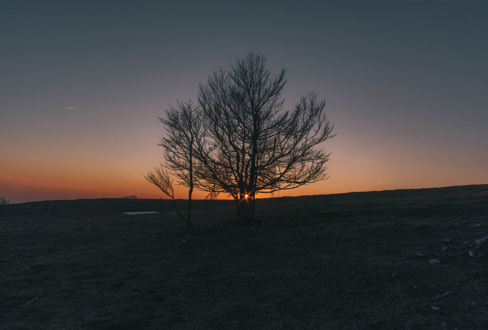 Lonely Tree Bare Tree Beauty In Nature Branch Clear Sky Day Horizon Over Land Isolated Landscape Lone Majestic Nature No People Olympus Outdoors Remote Scenics Silhouette Sky Solitude Sunset Sunset_collection Tranquil Scene Tranquility Tree Tree Trunk