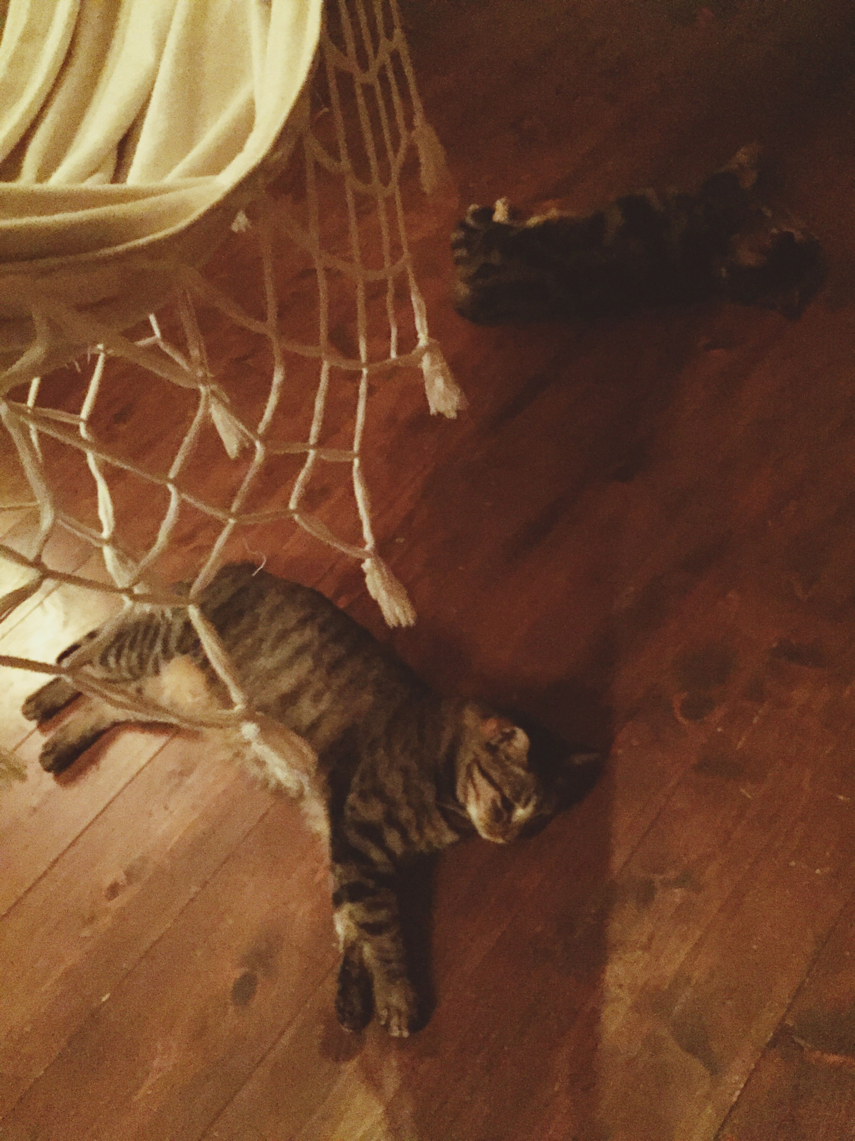 pets, domestic animals, domestic cat, one animal, animal themes, cat, mammal, indoors, high angle view, relaxation, feline, resting, selective focus, zoology, at home, animal, cozy, hiding