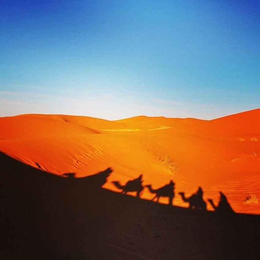 Dunes de Merzouga Maroc Morocco Nikonfr Camel Depardonmucem Travel Holiday Desert Merzouga Photomed2015