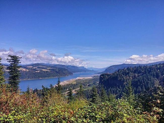 The Columbia River Gorge in OR. Oregonnw Oregon Cascadia Cascadiaexplored PNW PNWonderland Thatpnwlife Pnwcollective Pacificnorthwest Upperleft Visitoregon TravelOregon Oregonisawesome Thegorge Rivergorge Mountains River Gorge Viewpoint Forest Pine Evergreen