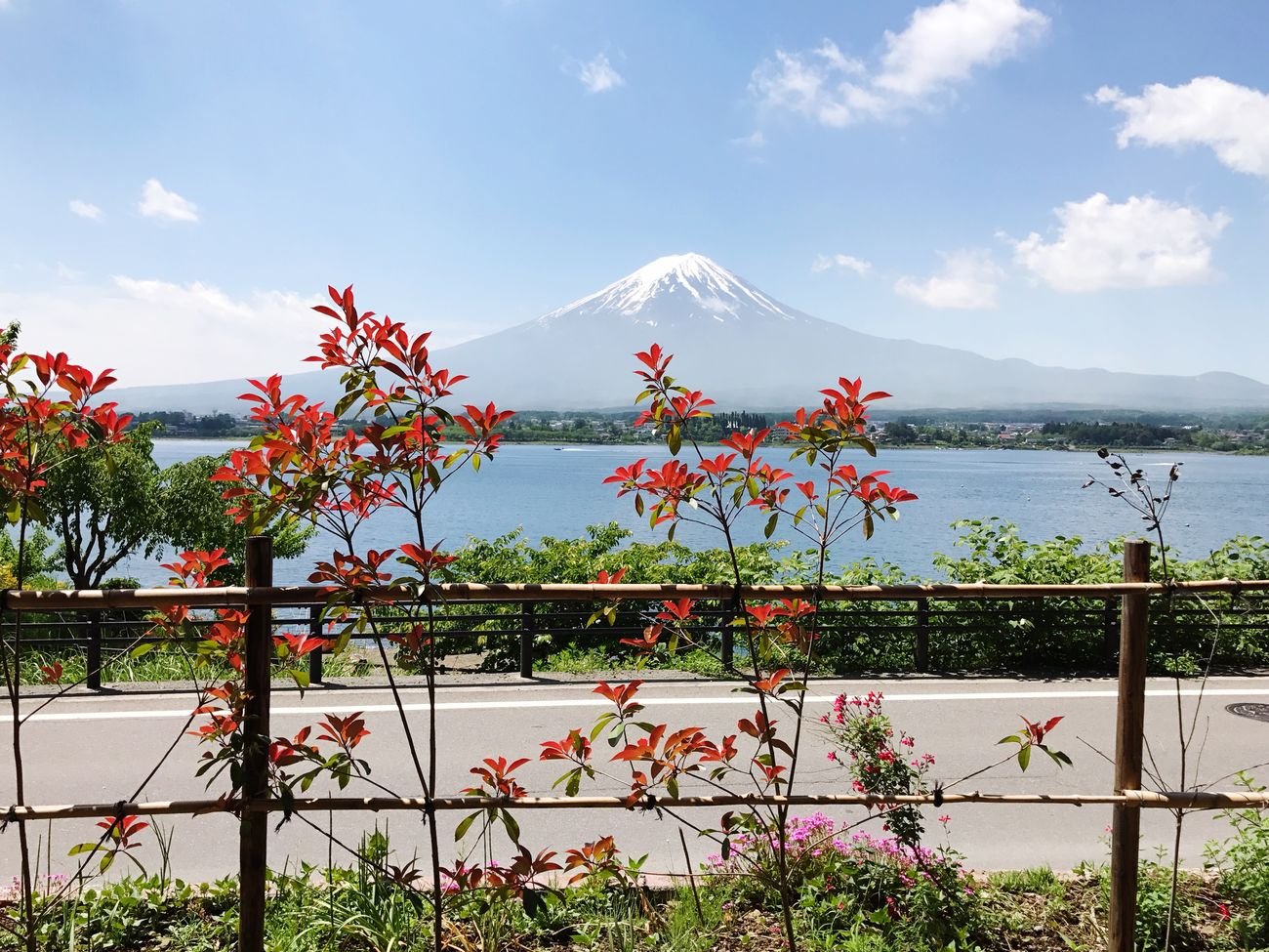 Beauty In Nature Nature Mountain Sky Scenics Growth Day Flower Tranquility Water Cloud - Sky No People Outdoors Plant Tranquil Scene Mountain Range Lake Tree Japan Japan Photography JapanLife Mt.Fuji Sunny Day Fujikawaguchiko