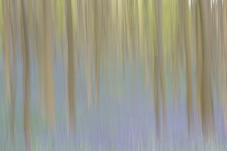 Forest with trees and soft green and blue colors in a motion picture as background or artist impression Abstract Backgrounds Belgium Forest Full Frame Hallerbos Nature Nature No People Pattern Textured