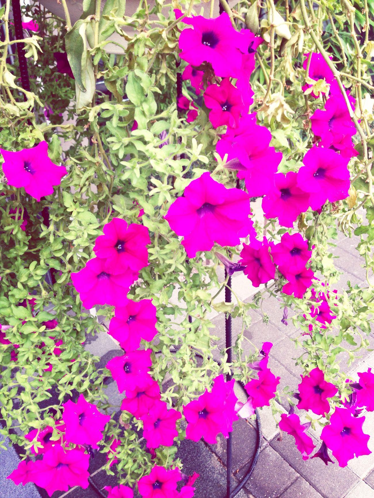 Flowers 合掌…