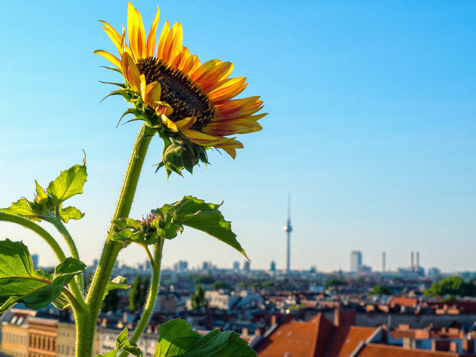 Beautiful stock photos of berlin, Architecture, Blooming, Blue, Building Exterior
