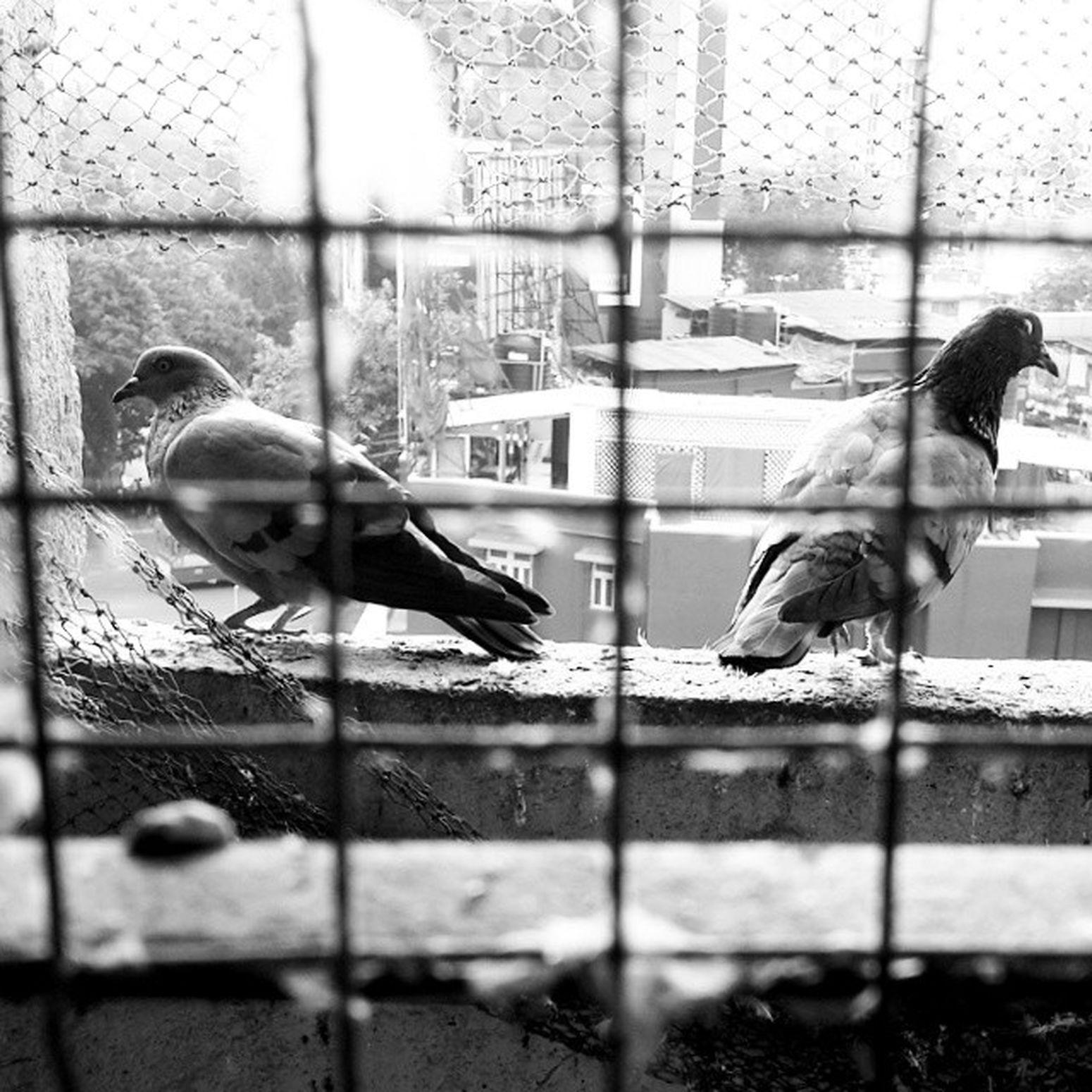 Caged InstaWings Wingsoffreedom Windowtonowhere