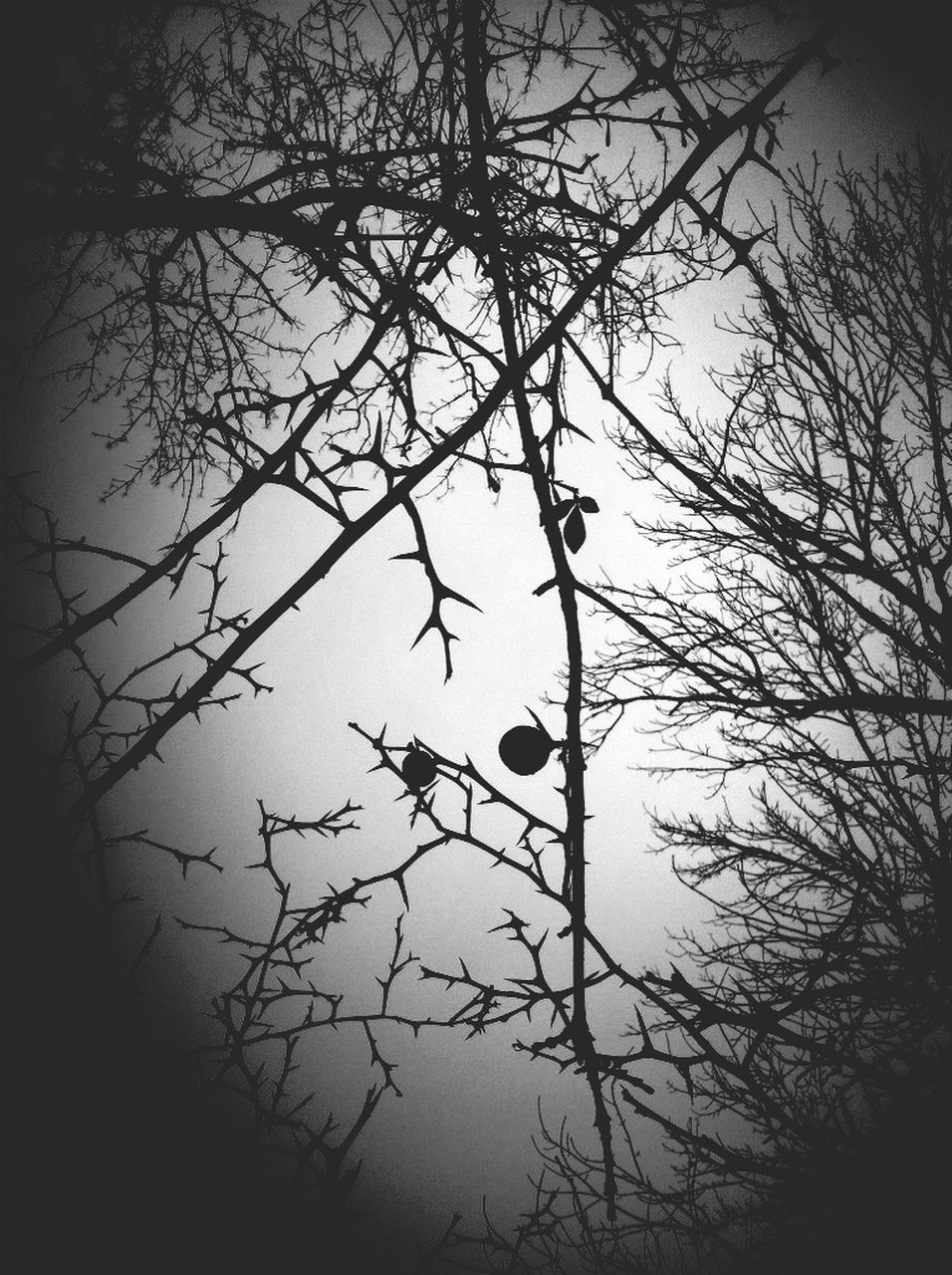 tree, branch, bare tree, nature, no people, outdoors, beauty in nature, growth, tranquility, day, silhouette, sky, close-up