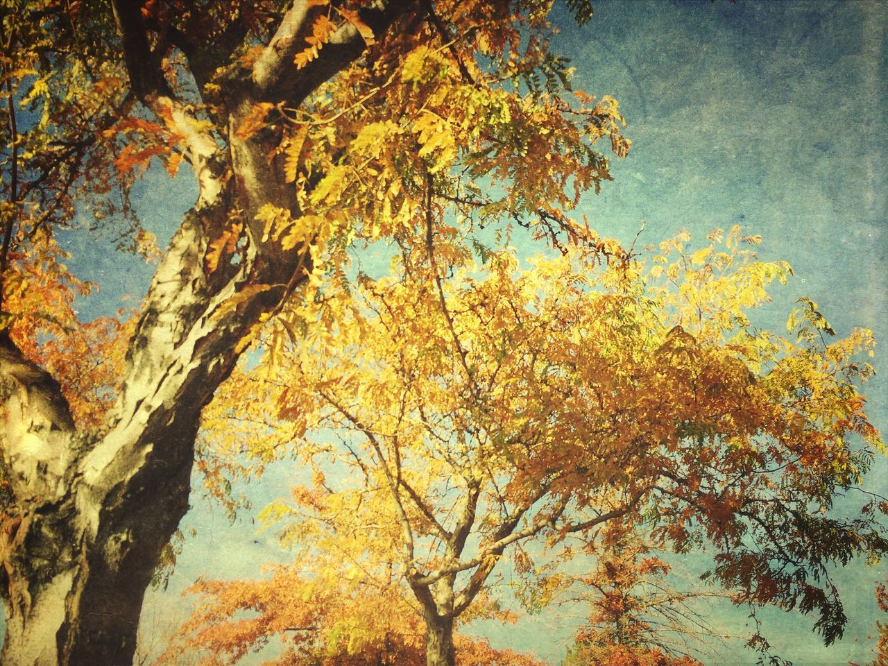 Afternoon delight. Iphoneonly Autumn Nature_collection Nature Trees Mextures Taking Photos Mobilephotography Photography Photo Mobile Photography EyeEm Nature Lover Check This Out