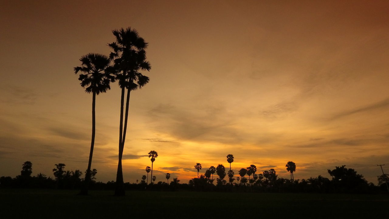 tree, sunset, palm tree, beauty in nature, nature, silhouette, tranquil scene, scenics, tranquility, orange color, landscape, growth, field, cloud - sky, tree trunk, sky, no people, outdoors, grass, day