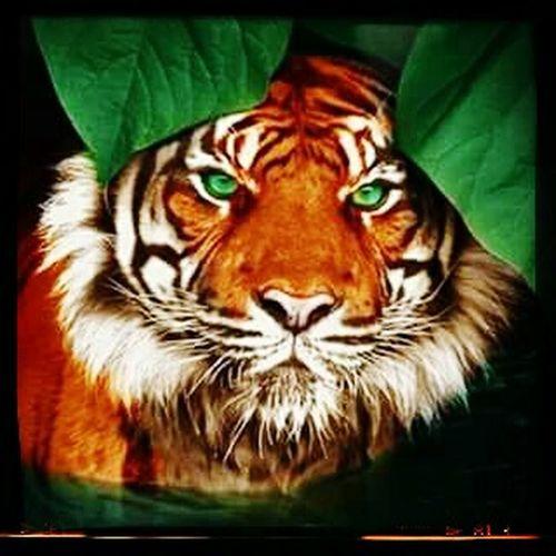 Cat Eyes Catdammit Cats Of EyeEm Cat Lovers Beautiful Animals  My Passion Just Damn Beatiful