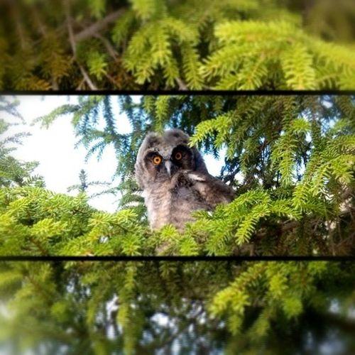 İnonuuniversite Inönü Kus Cenneti baykuş