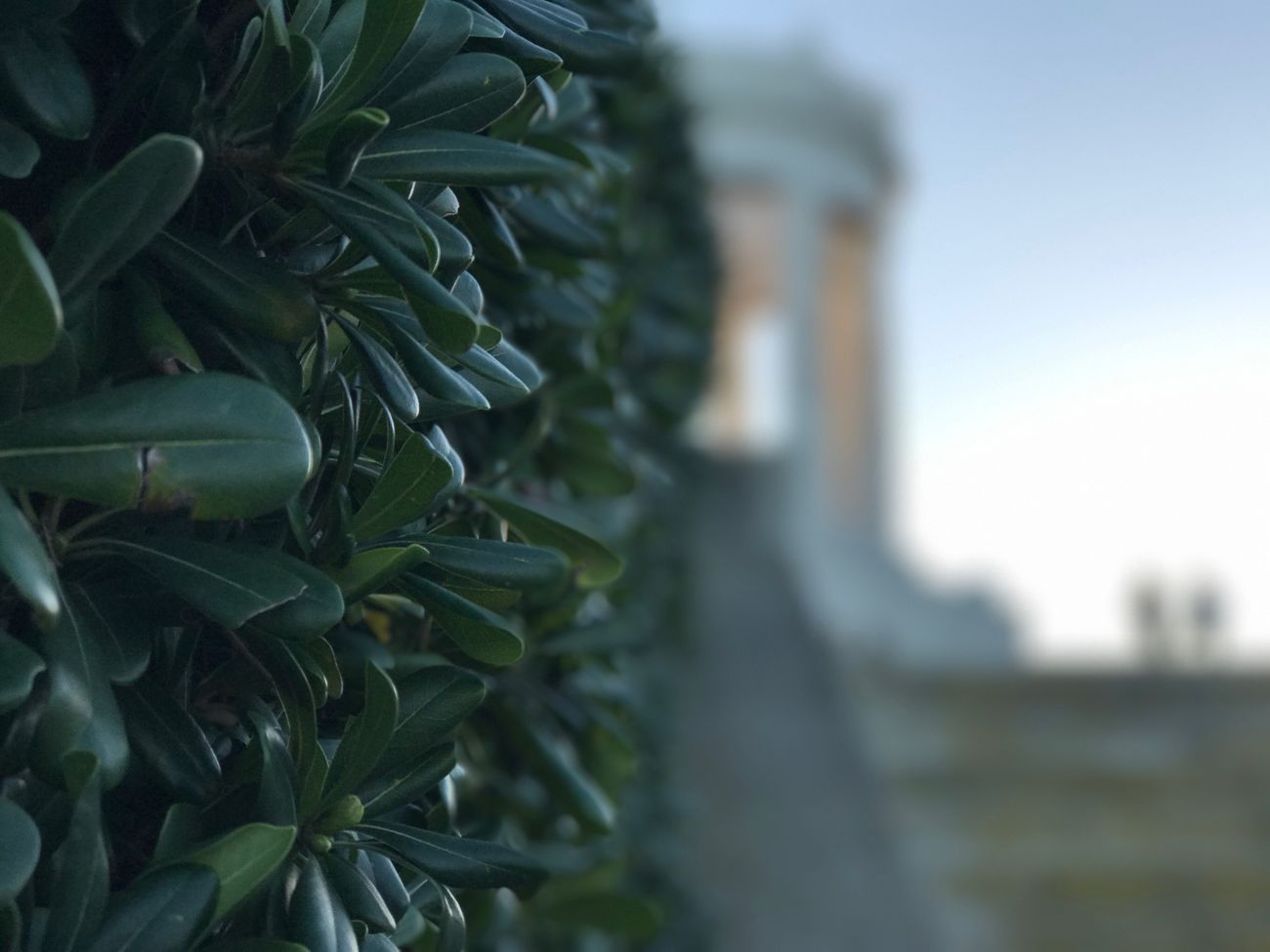 Green Color Leaf Nature Plant Focus On Foreground Outdoors Day Cityscape Camera - Photographic Equipment Mycity Ancona, Italy Ancona Italy Sky Monument Architecture Photographing History