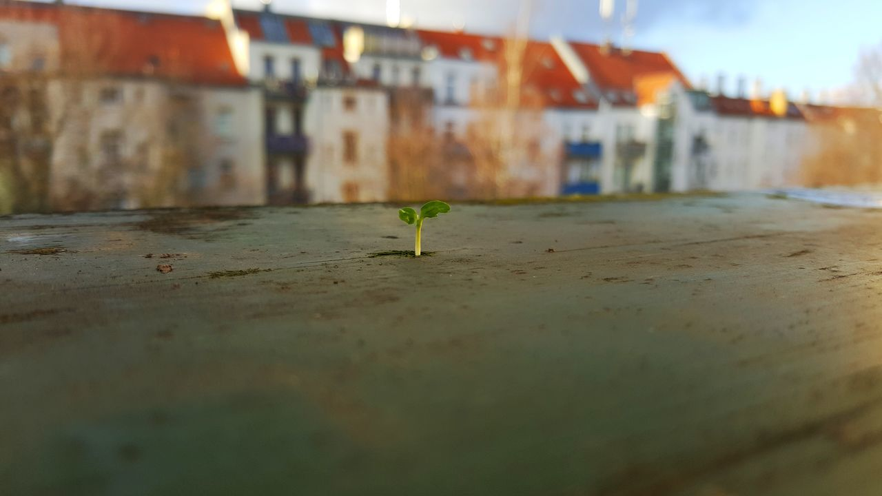 No People Outdoors Close-up seedling smal plant in november Day Built Structure Architecture First Eyeem Photo