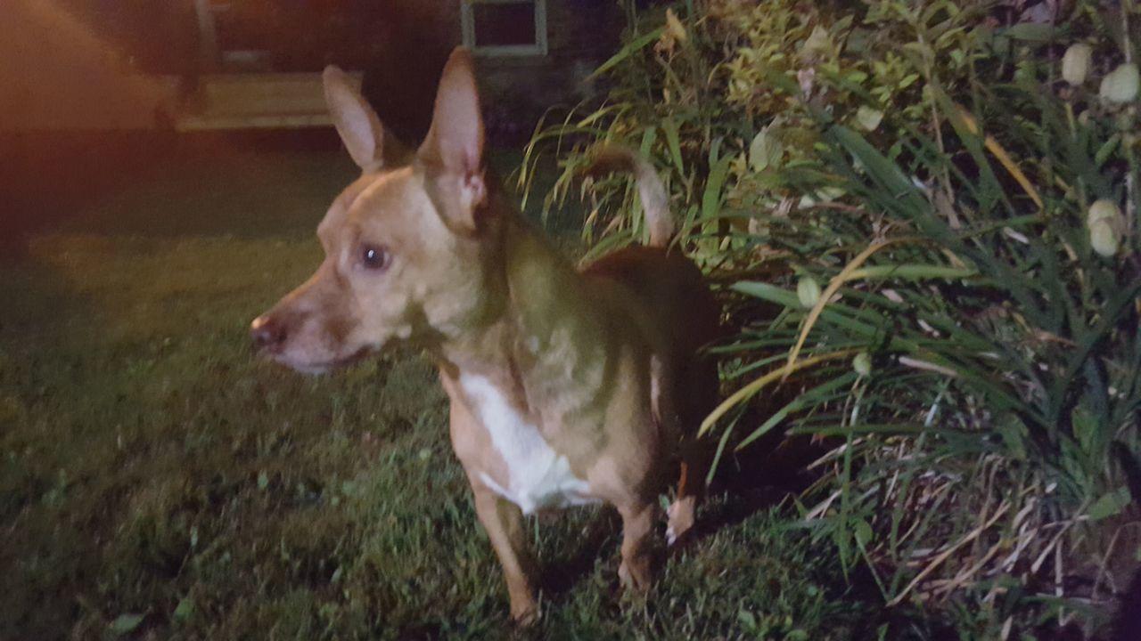 Animal Themes At Night Dog Dog In Backyard Dog Portrait One Animal Outdoors Pets