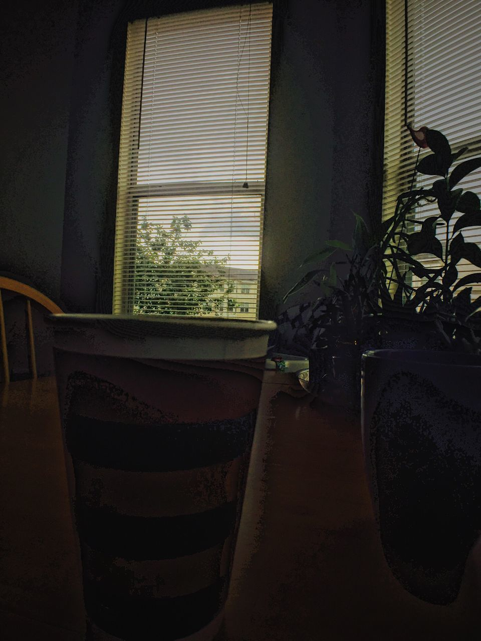 window, potted plant, plant, indoors, no people, home interior, day, growth, curtain, built structure, drink, architecture, close-up, freshness