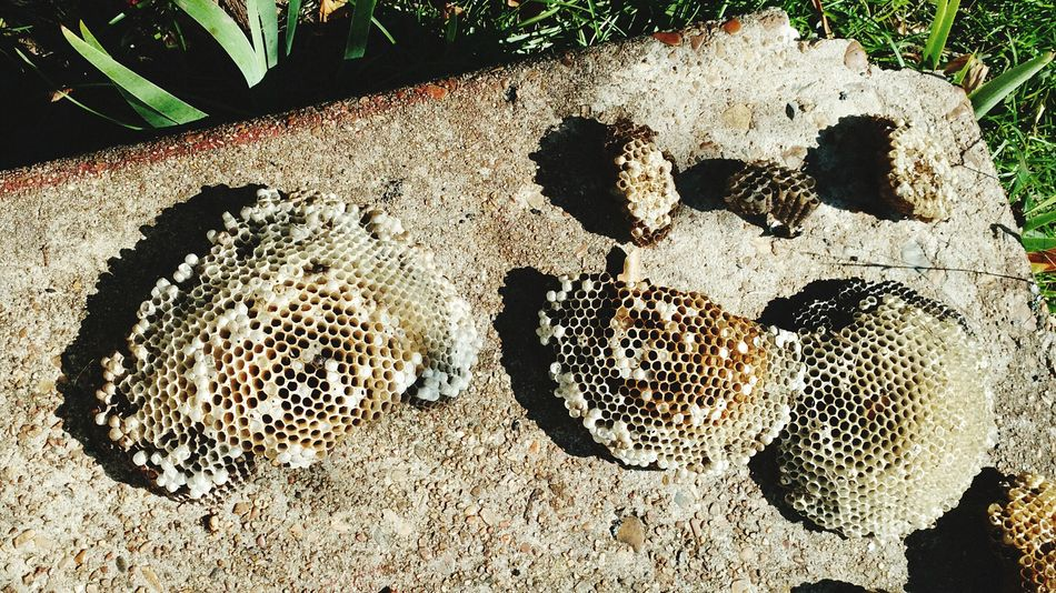 Wasp nests! Nature No People Wasps Nest