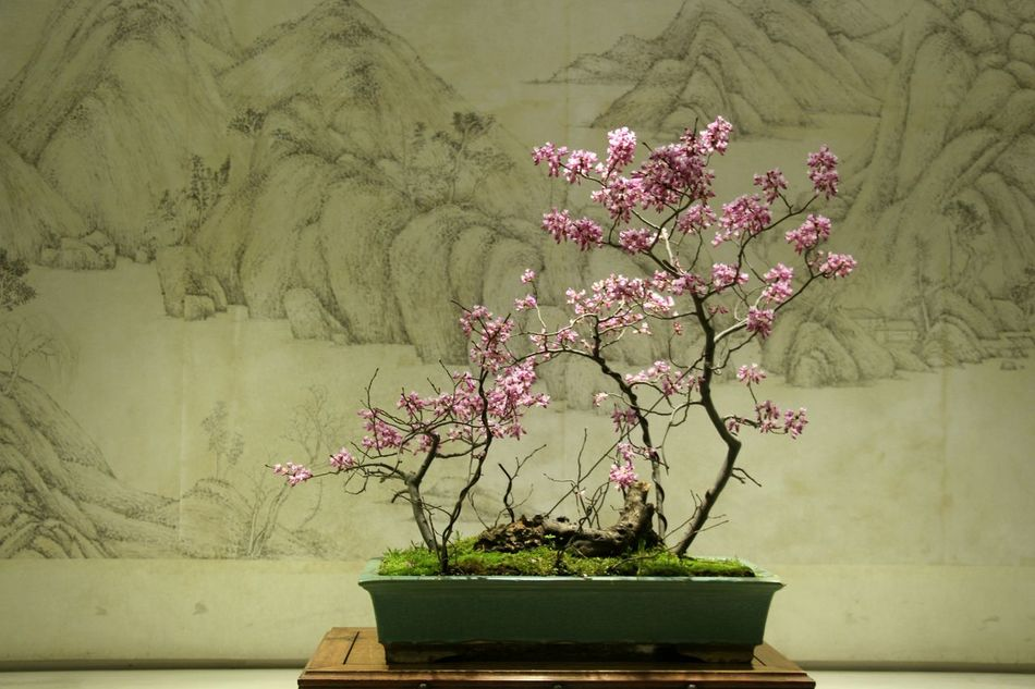 Beauty In Nature Beauty Of China Bonsai Tree Close-up Flower Fragility Freshness Growth Indoors  Miniascape Miniature Nature Oriental Oriental Style Pink Color Plant Potted Plant Potted Plants Style Of China Tree Art Is Everywhere