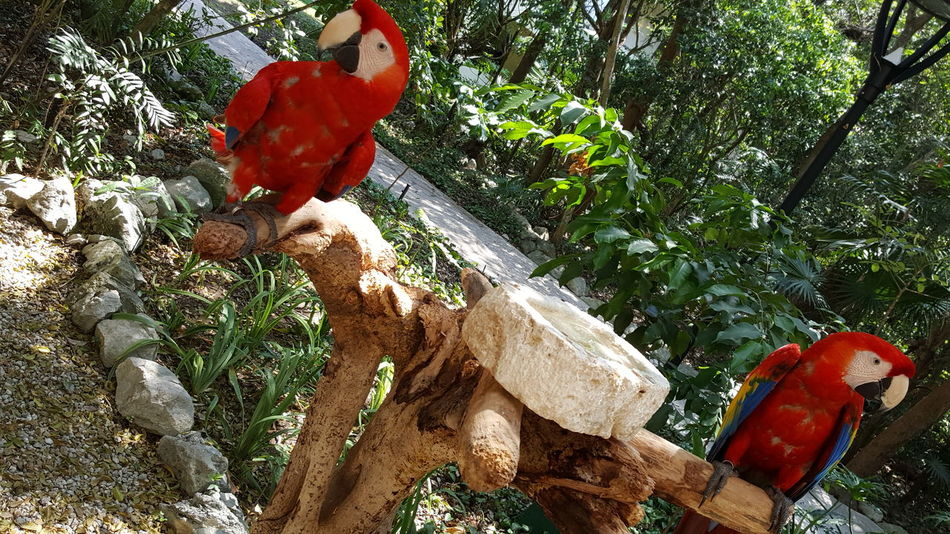 Two Animals Two Birds Macaw Macaw Parrot Birds Animals In The Wild Mexican Animal Wildlife Animal Nature Tree Outdoors Parrots