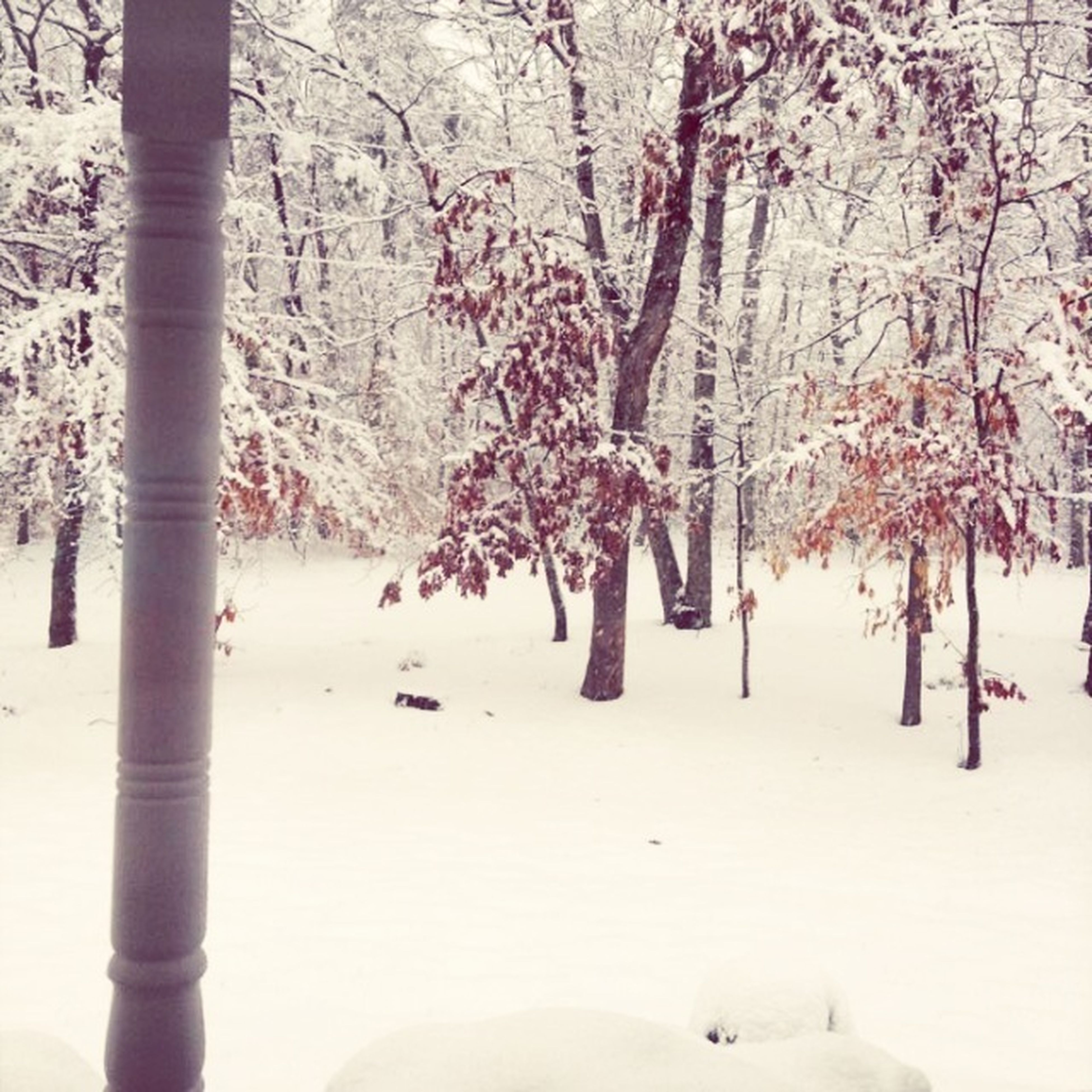 snow, winter, cold temperature, tree, season, weather, tranquility, nature, branch, bare tree, covering, tree trunk, beauty in nature, tranquil scene, landscape, scenics, frozen, field, growth, covered