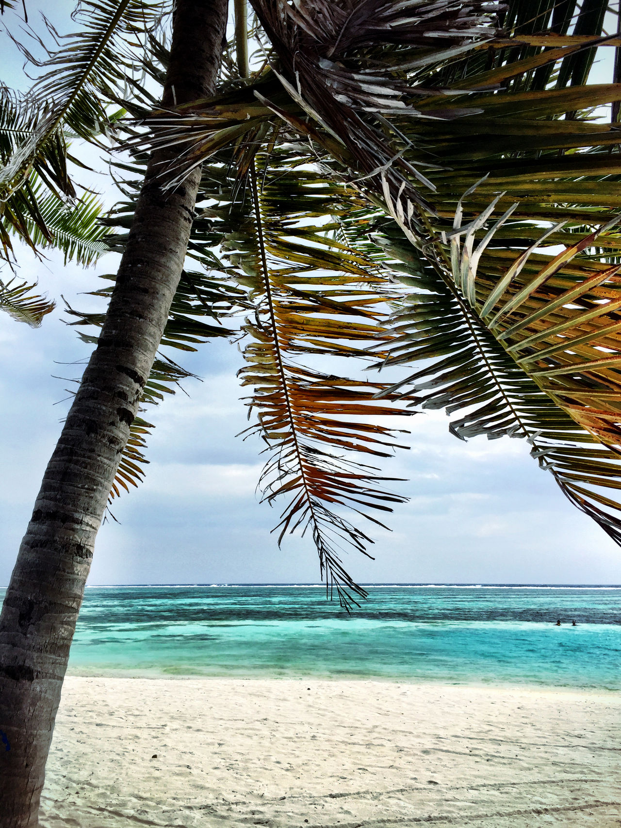 Maldives Atoll Beach Beachphotography Life Is A Beach Peace And Quiet Sea And Sky Palm Trees Blue Water Crystal Clear Waters