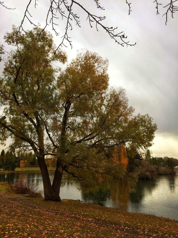 Tree Autumn Water Nature Sky Change Scenics Beauty In Nature Tranquility Outdoors Reflection