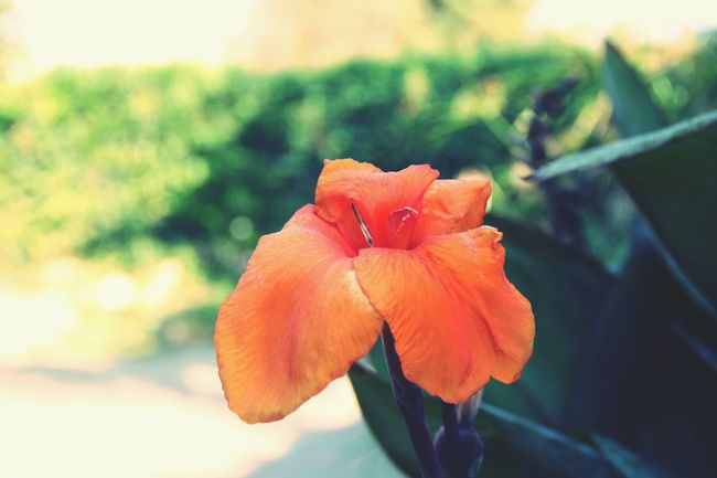 Flower Orange EyeEm Nature Lover Beautiful Flower Natural Color