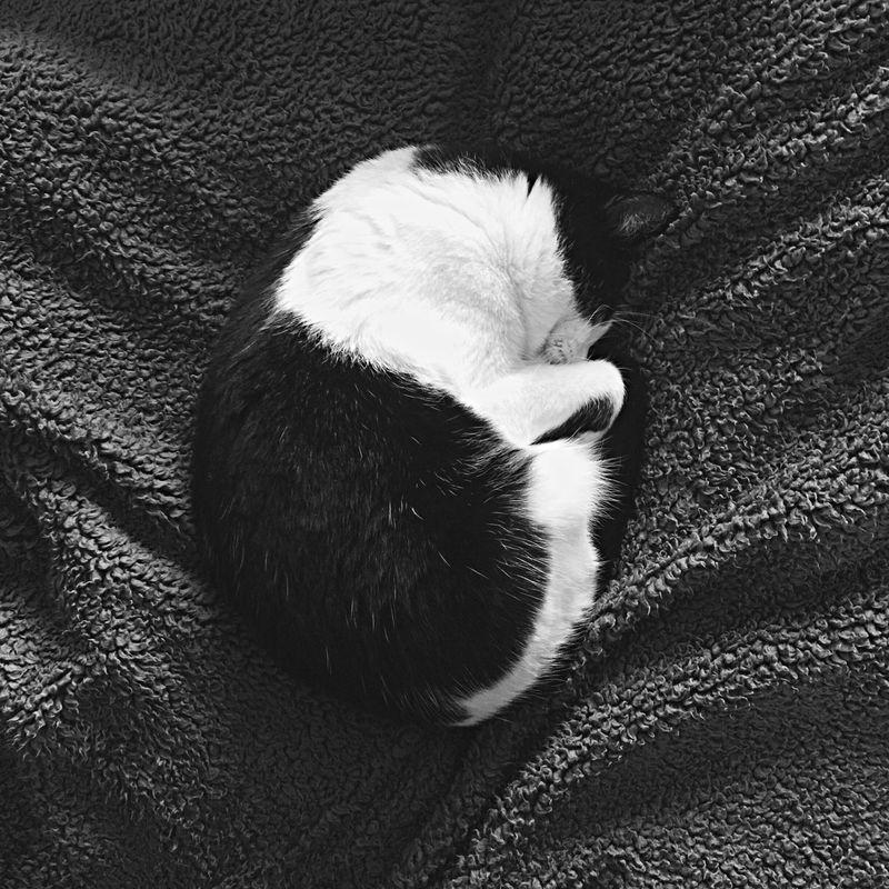 Mercy  Cat Monochrome Blackandwhite