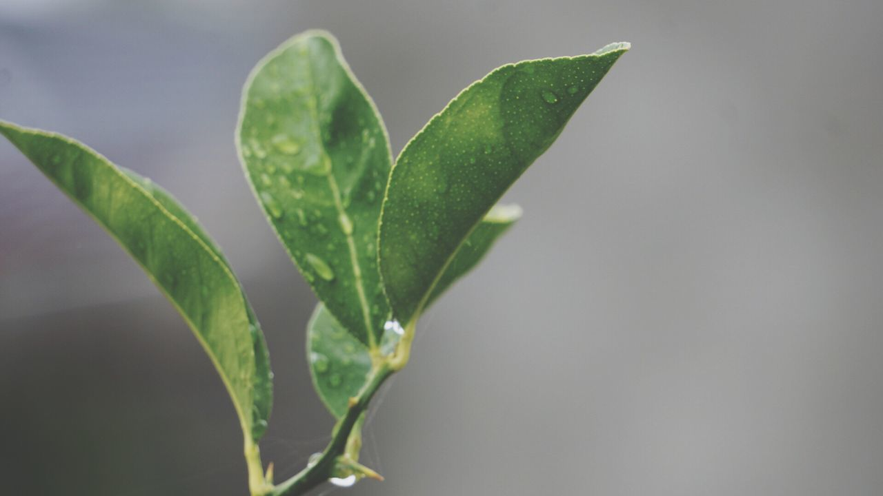 Growth Drop Leaf Close-up Nature Green Color Plant Wet Freshness Dew New Life Day Beauty In Nature Beginnings Water Fragility Outdoors RainDrop
