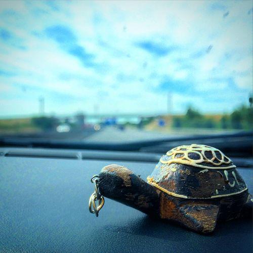 Turtle Travel