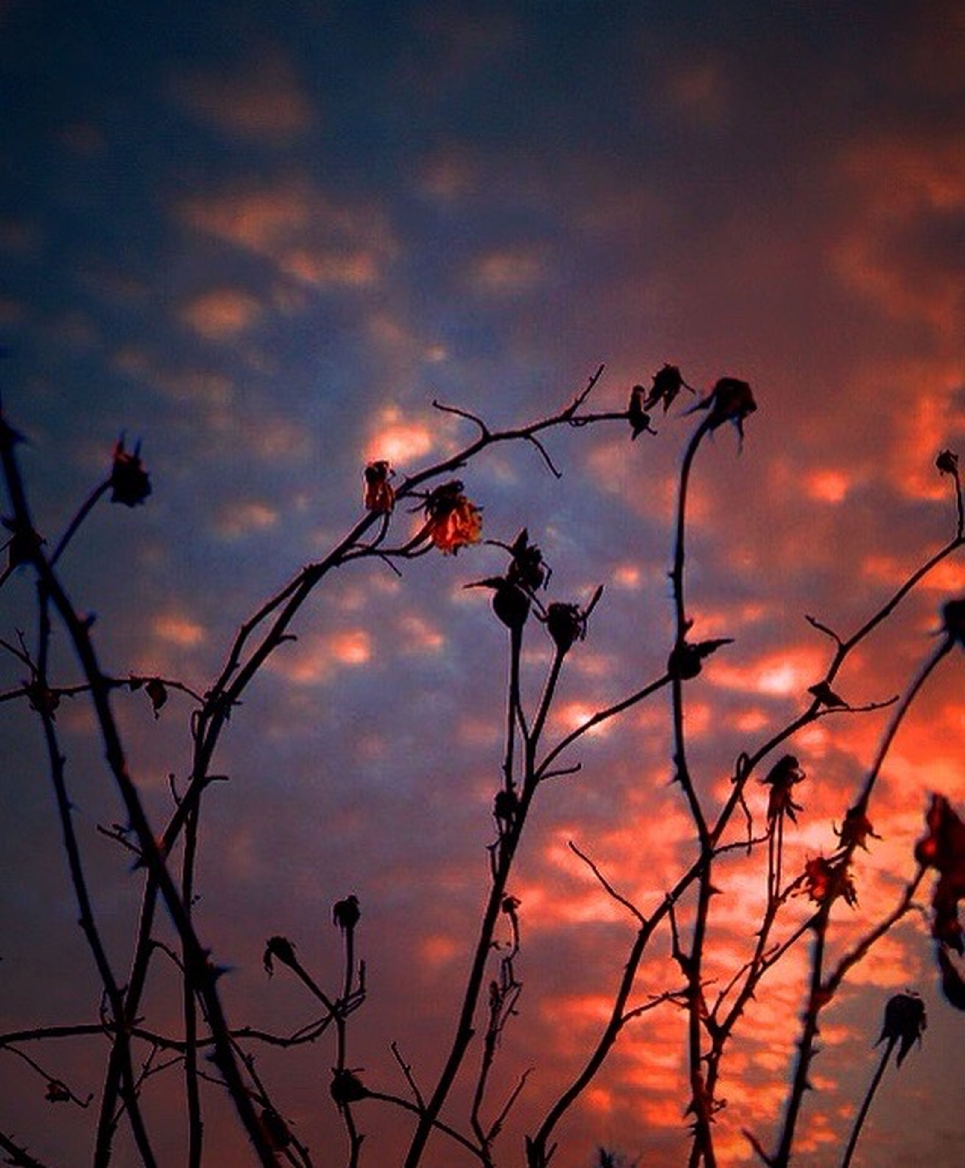 sunset, sky, silhouette, cloud - sky, orange color, low angle view, nature, cloudy, beauty in nature, tranquility, cloud, dramatic sky, plant, branch, scenics, sun, growth, dusk, outdoors, bare tree