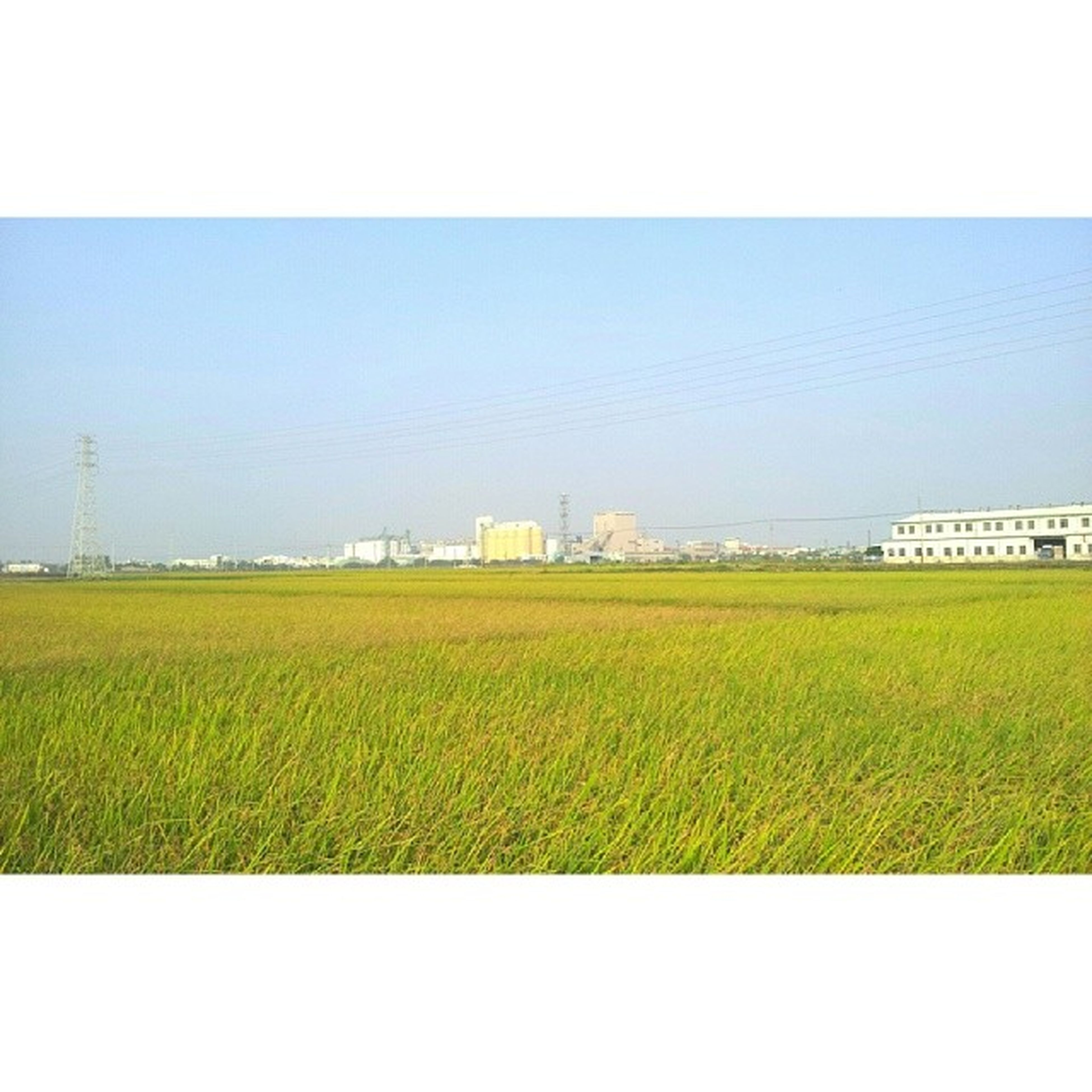 field, clear sky, rural scene, agriculture, transfer print, landscape, copy space, growth, yellow, built structure, farm, nature, building exterior, tranquil scene, auto post production filter, blue, tranquility, grass, beauty in nature, architecture