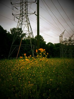 Power Lines by Shelia