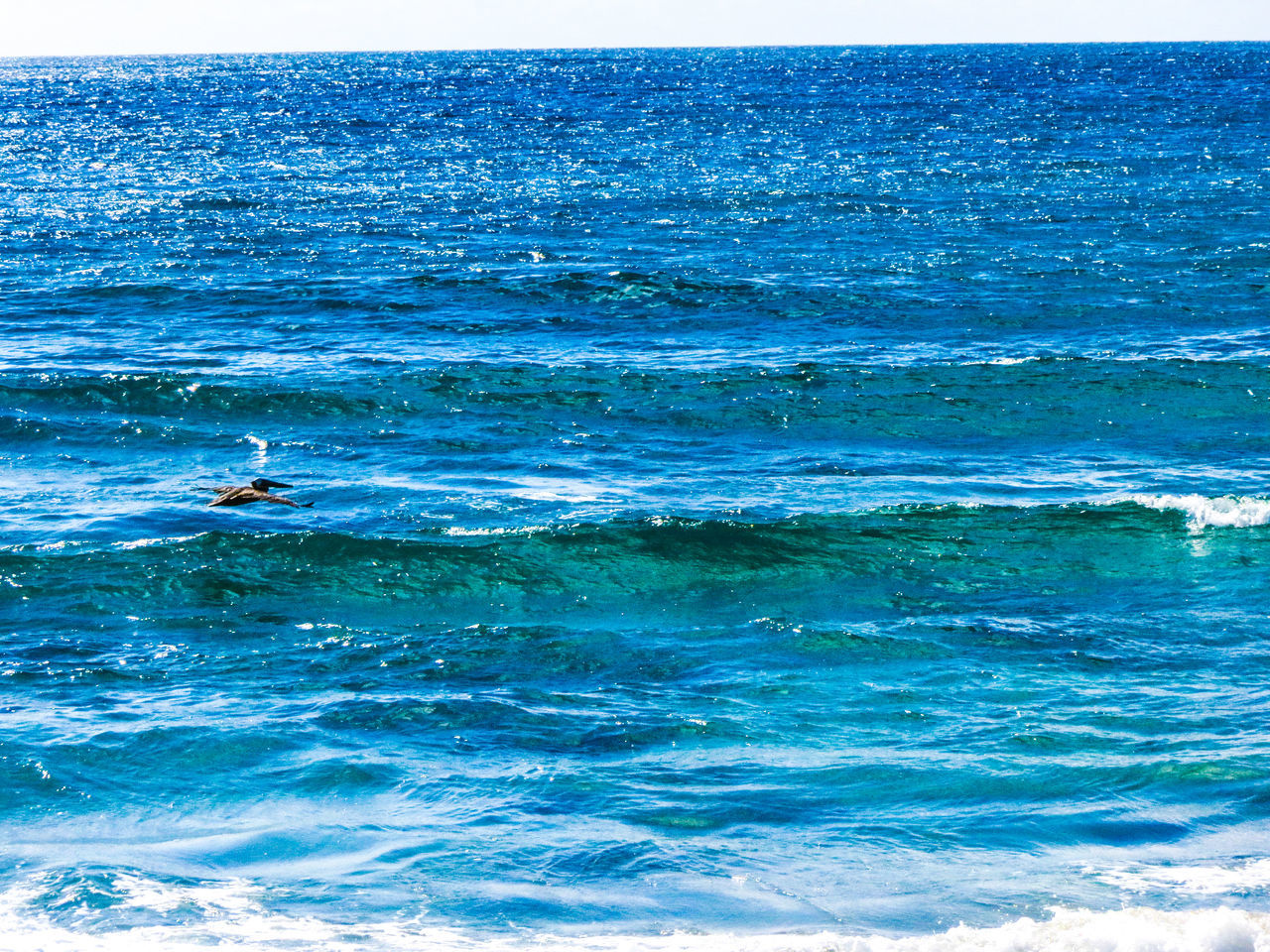 Blue Wave Sea Backgrounds Water Beach Rippled Abstract Full Frame Nature Beauty In Nature Outdoors Animals In The Wild No People Day Photography Scenics Horizon Over Water Swimming Sea Life Animal Themes Close-up UnderSea