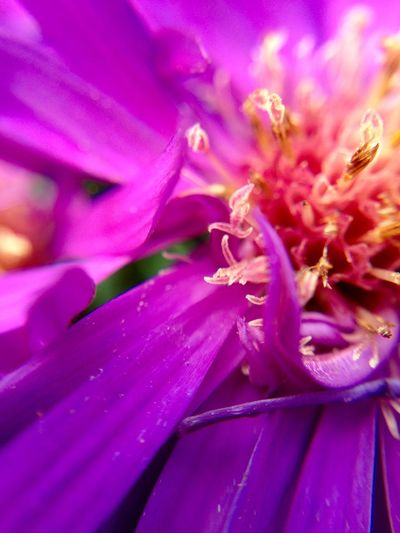 Fight for the fairytale, it does exist! You just have to believe! Zoom in! Macro Taking Photos EyeEm Nature Lover Relaxing Purple Flowers Enjoying Life Spirituality Macro Beauty Color Palette The Magic Mission Maximum Closeness
