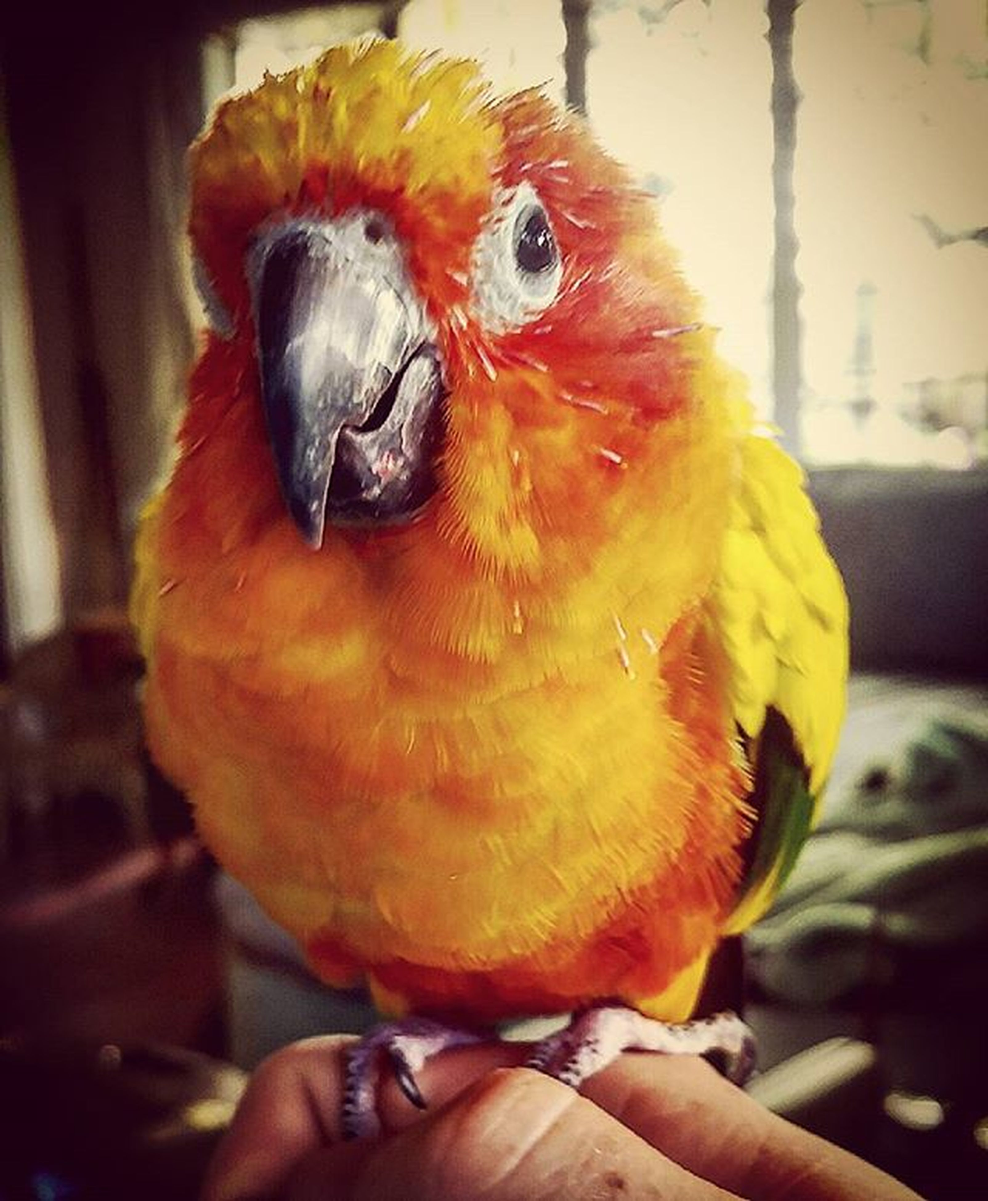 one animal, animal themes, person, holding, focus on foreground, bird, wildlife, animals in the wild, close-up, parrot, pets, unrecognizable person, part of, lifestyles, animal head, men, human finger