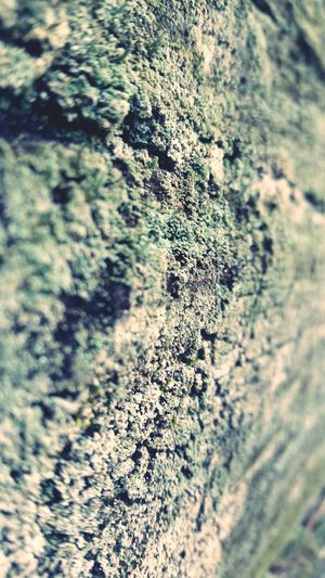 Textures And Surfaces Point Of View Nature Outside