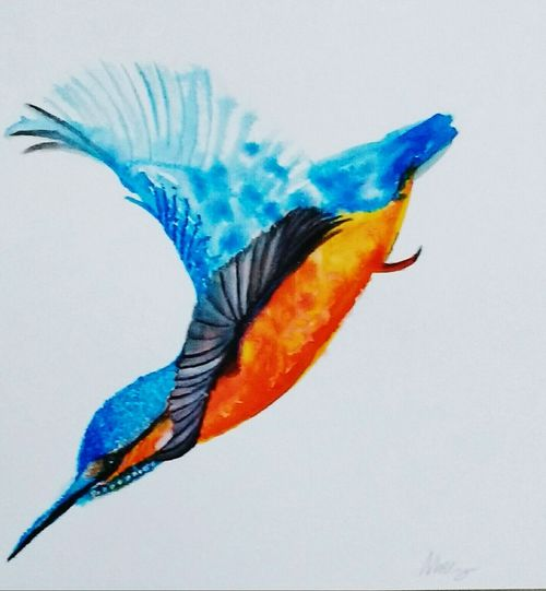 Bird Feather  Animals In The Wild Close-up Flying Watercolor Kingfisher Bird Wildlife And Nature No People Malechite Diving Birdpainting