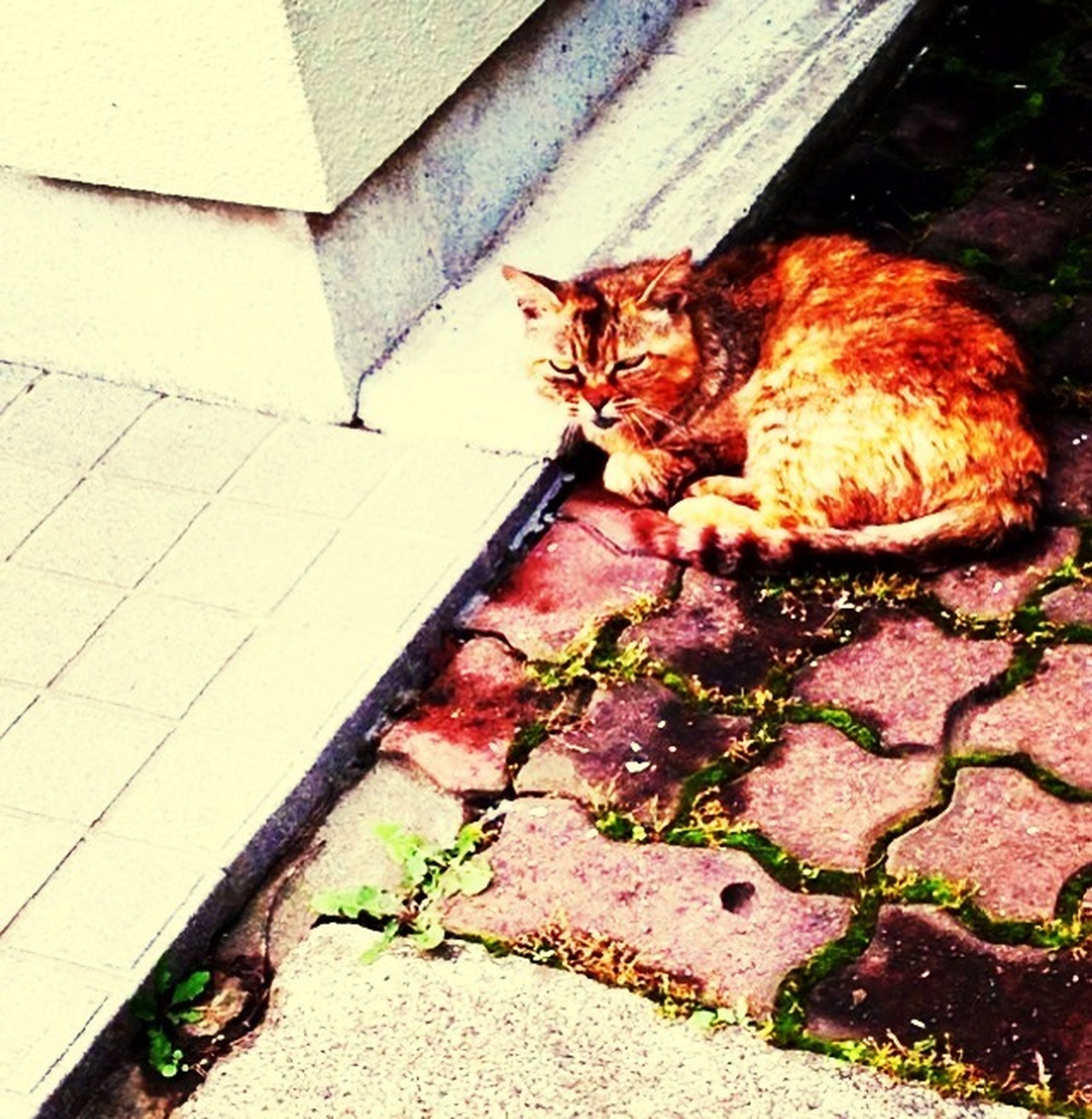 domestic animals, domestic cat, wall - building feature, pets, cat, high angle view, built structure, animal themes, sunlight, architecture, mammal, no people, day, one animal, leaf, outdoors, building exterior, paving stone, plant, abandoned