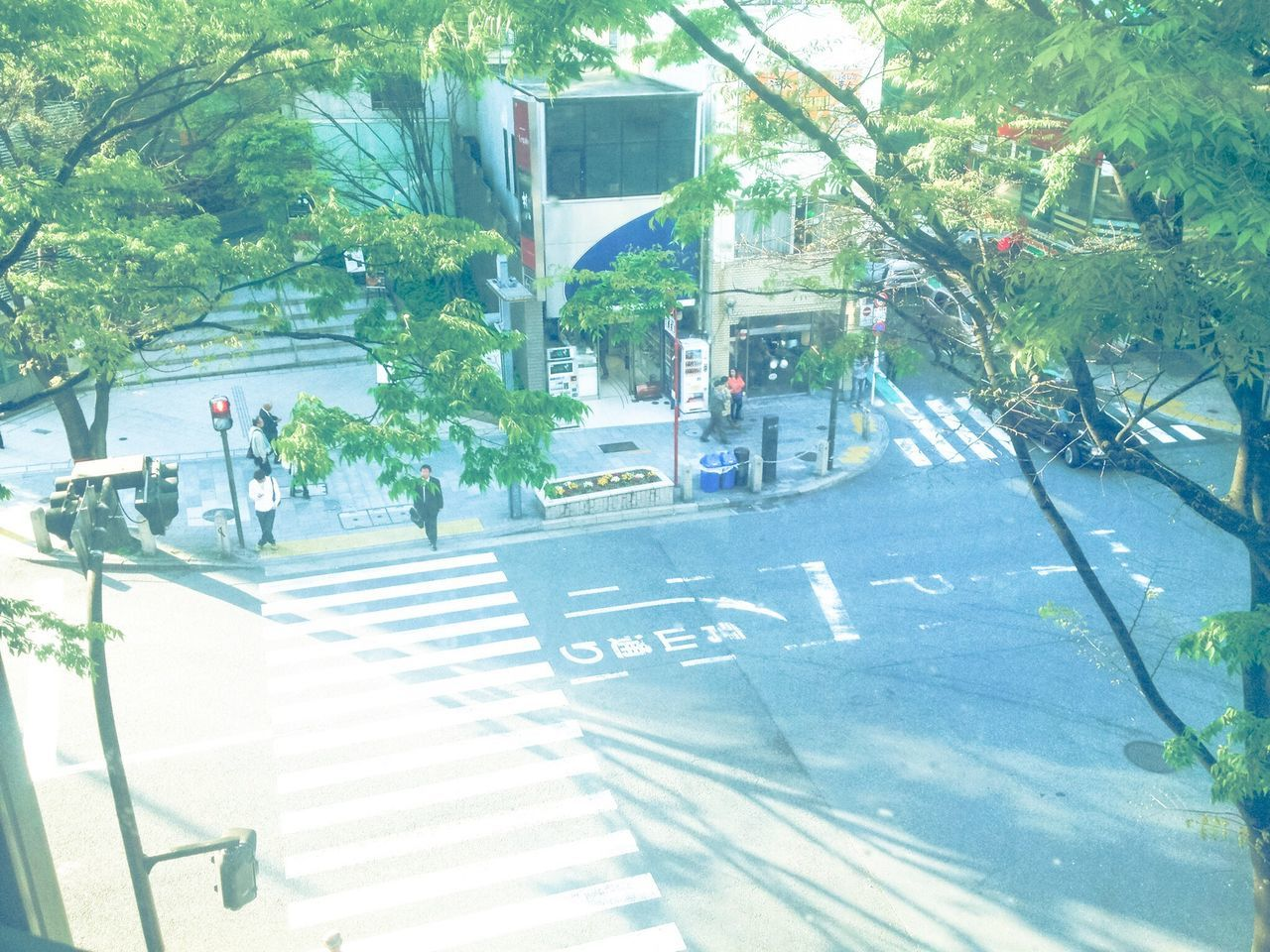 tree, incidental people, plant, day, growth, street, outdoors, sunlight, nature, city, people
