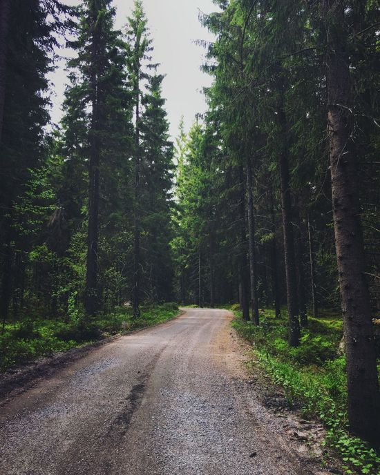 A beautiful forest in the middle of nowhere Tree Forest Road Nature Scenics Outdoors Tranquil Scene Landscape No People Beauty In Nature Day Winding Road
