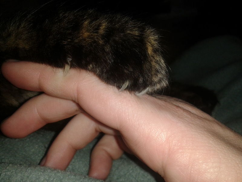 Cat Scratch Fever EyeEm Animal Lover Cat Animal Themes Pets Of Eyeem Trouble Cats Pets Animal Looking For Trouble Paw Cat Photography Cat Claw Hand Fingers Close-up Close Up Ouch Claws Out Claw Claws'n Paws Kitty Bad Kitty