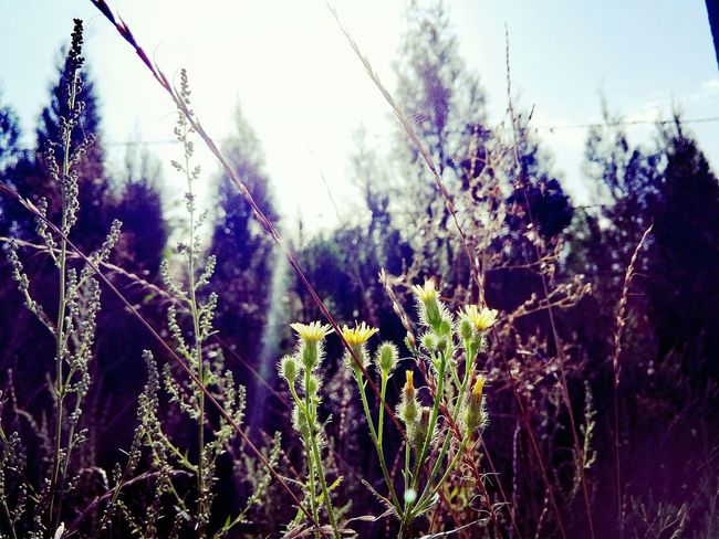 Hot Day Warm First Eyeem Photo Fafe Nature Journey Strong Original Experiences Brva & Sis We Just Cooln Meinautomoment 43 Golden Moments Hope Feel The Journey Fafa Hello World Landscape 43golden Moment Good Morning Scenery Love Feeling Good Dream Meinautomoment