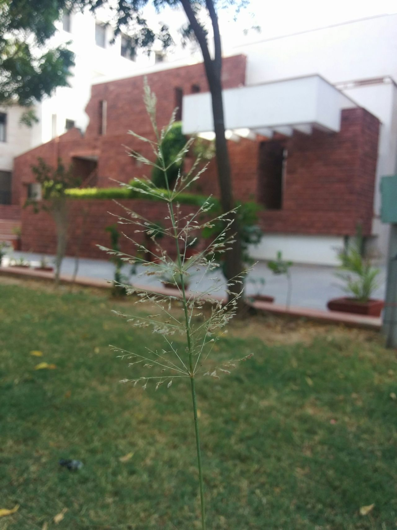 Little ray of hope Hope Grass Beautiful College Peace Nexus5 Google