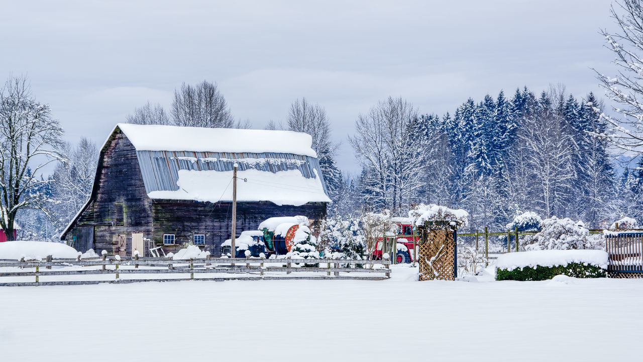 Barn Cold Temperature Day Forest Frozen Nature No People Outdoors Snow Snowflake Snowing Tranquility Tree Winter