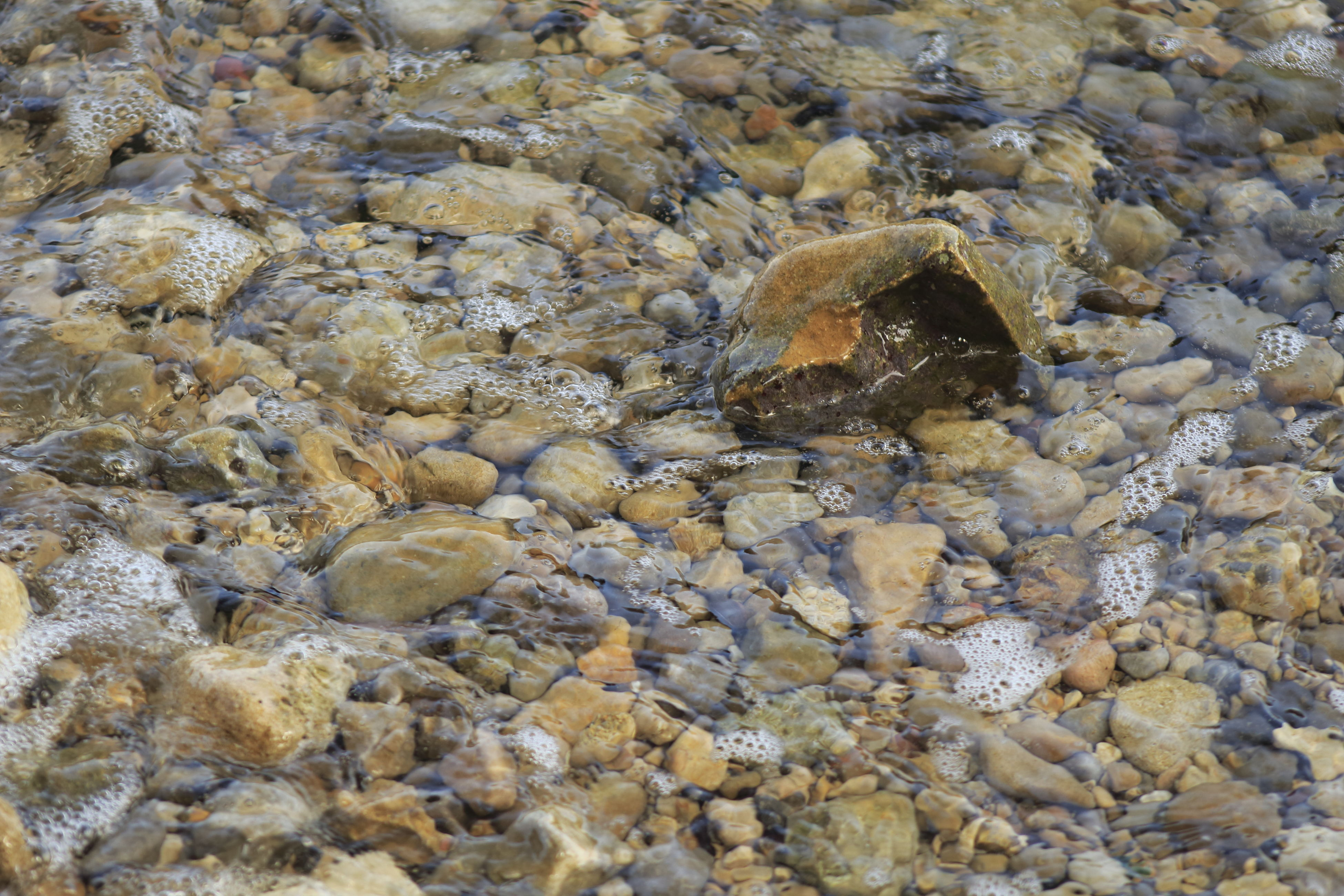 animal themes, animals in the wild, wildlife, one animal, water, high angle view, rock - object, nature, sea life, swimming, stone - object, zoology, fish, day, outdoors, underwater, no people, close-up, pebble