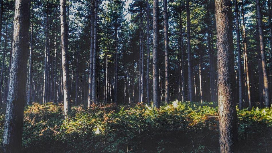 Compressed Trees Nature Landscape 16x9