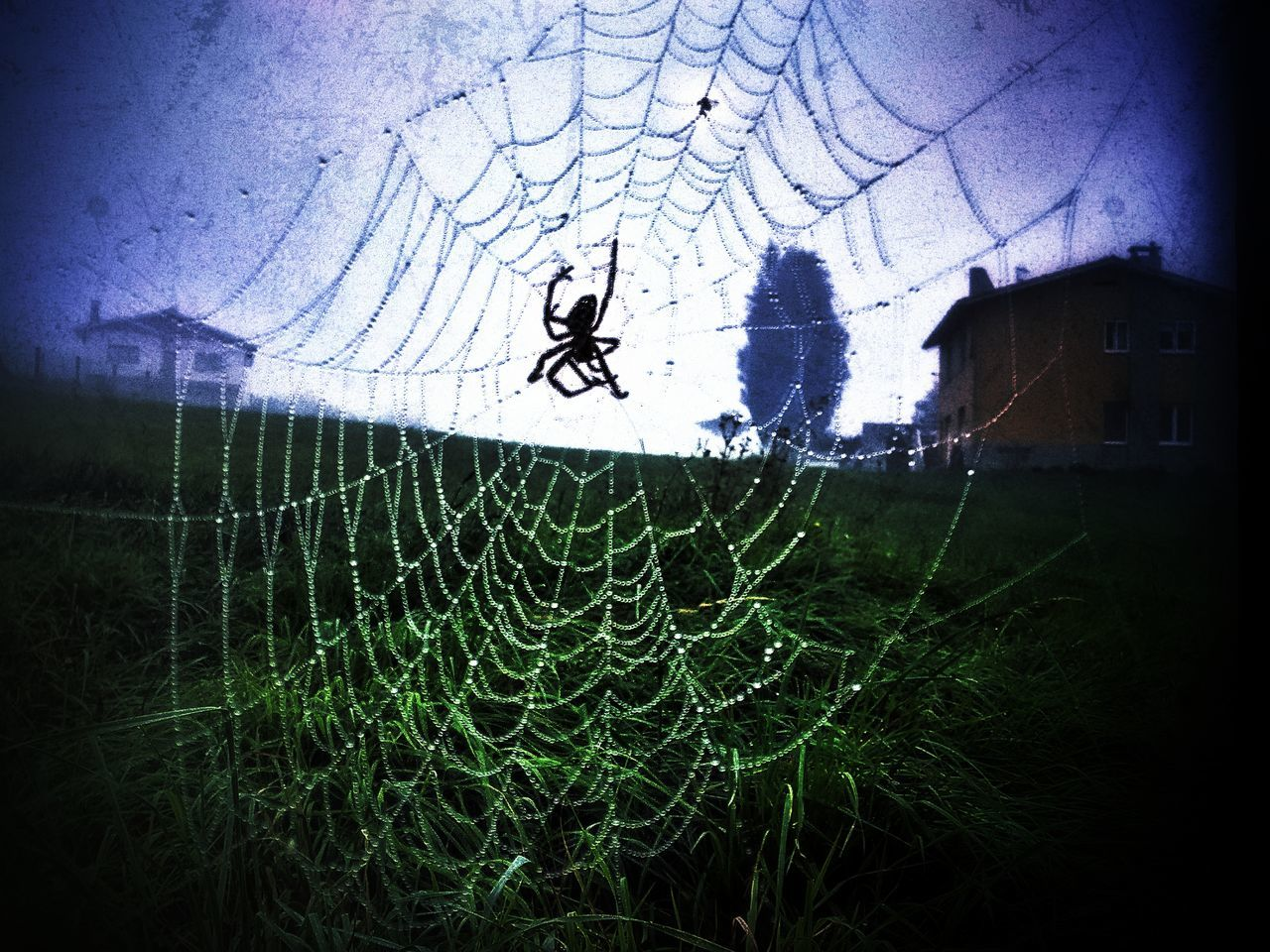 Animal Themes Beauty In Nature Close-up Day Drop EyeEm Nature Lover Fragility Grass Lumicar Nature No People Outdoors Sky Spider Spider Web Survival Tree Water Web Wet