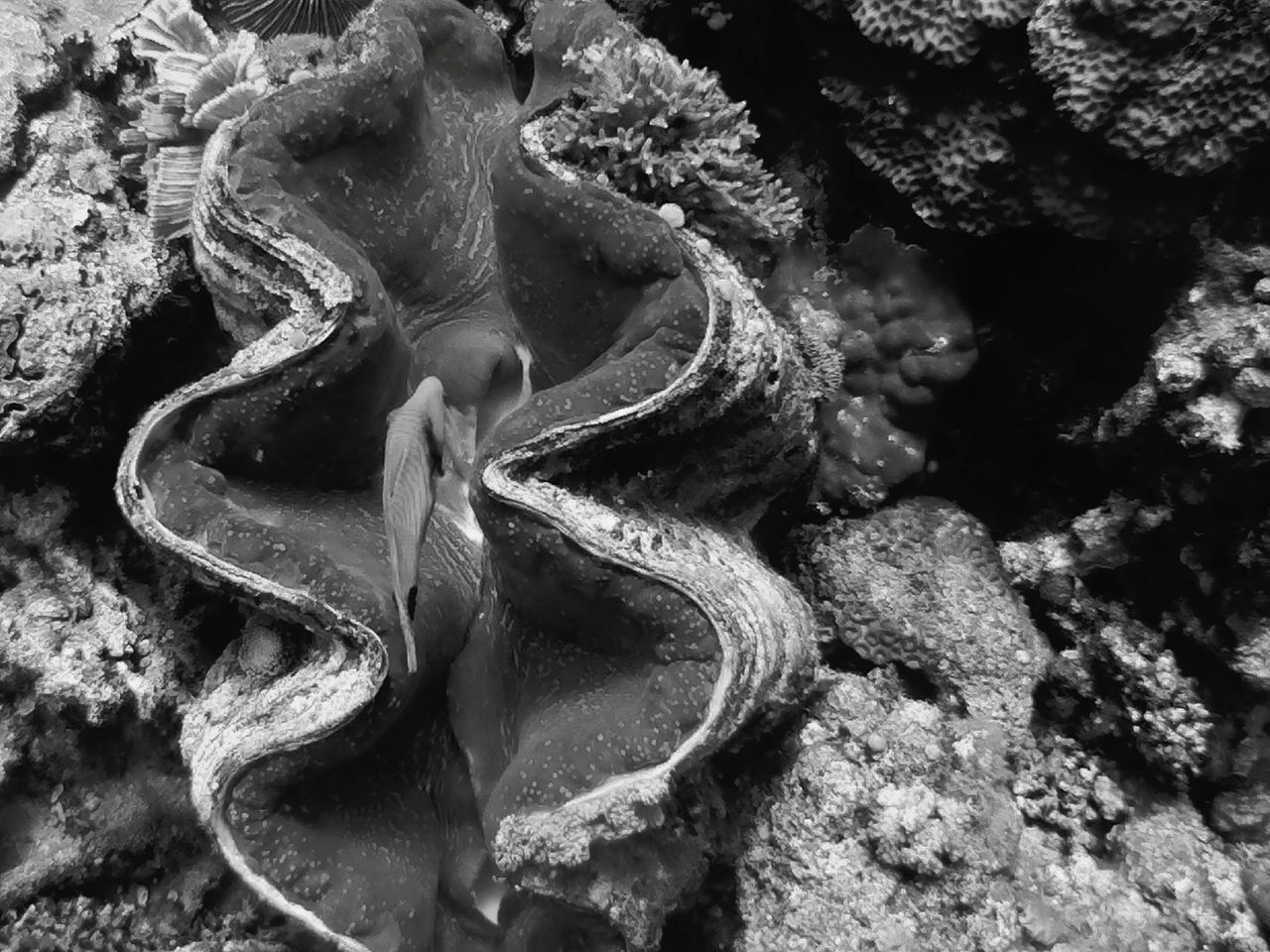 giant clam Vacations Beauty In Nature Anilao, Batangas UnderSea Underwater Sea UnderSea Sea Life Giant Clam Nature