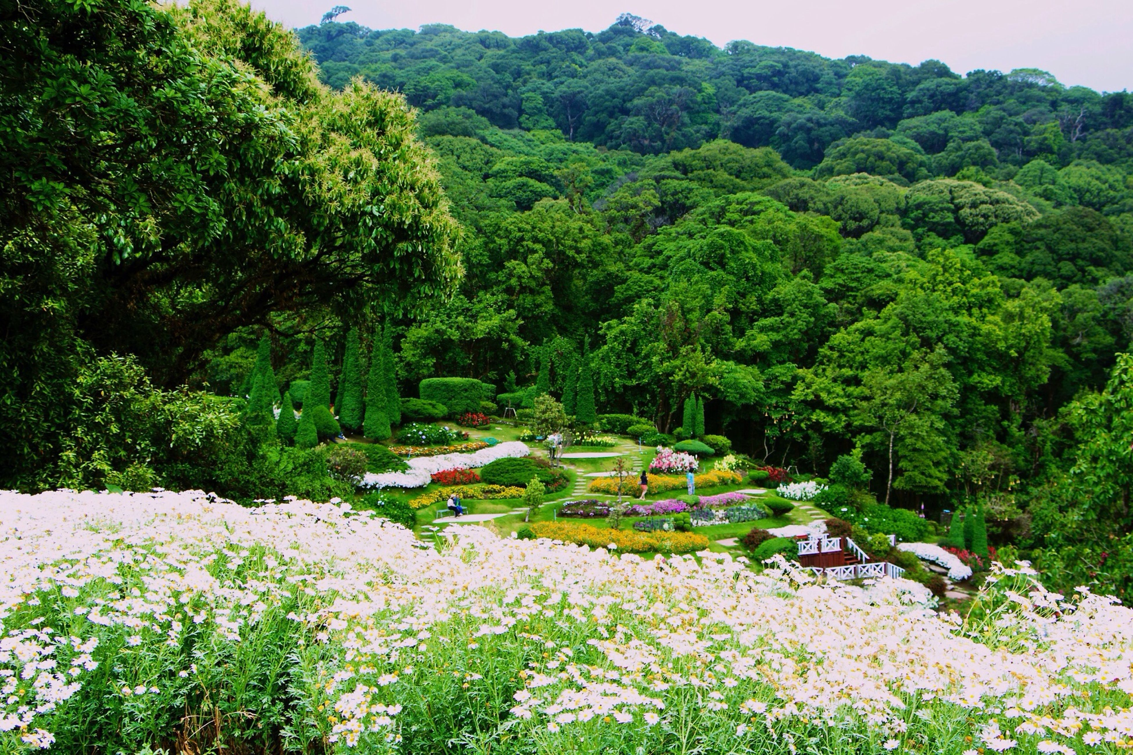 tree, flower, growth, beauty in nature, green color, nature, plant, tranquil scene, freshness, lush foliage, tranquility, scenics, landscape, high angle view, day, fragility, green, blossom, outdoors, mountain