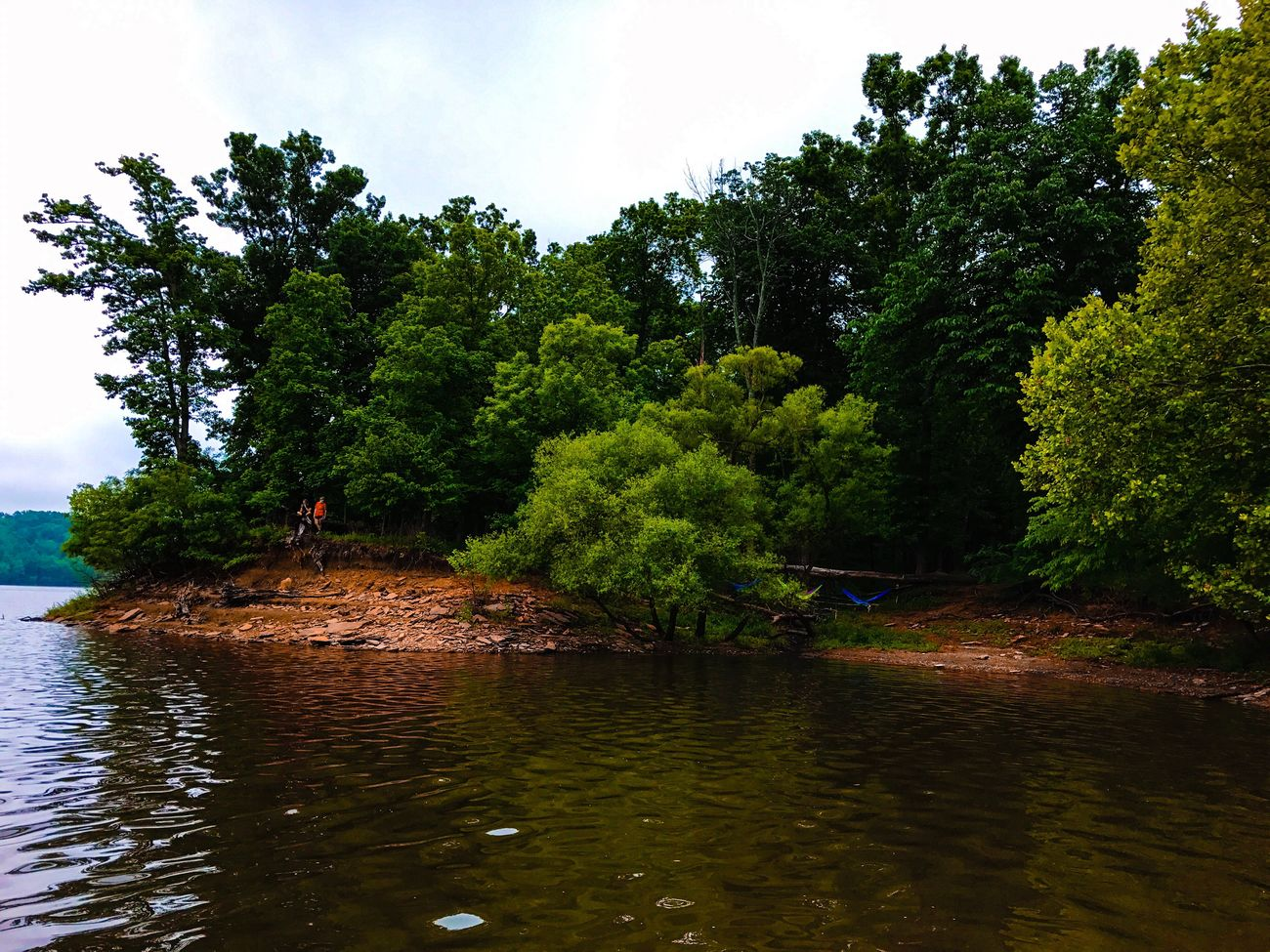 Tree Water Nature River Outdoors Beauty In Nature No People Sky Scenics Growth Day Regatta